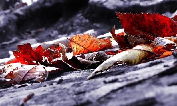 automne dordogne