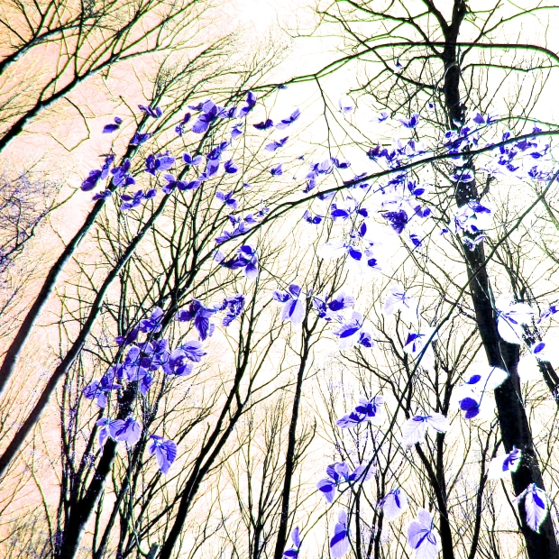Papillons de la forêt-VIOLET